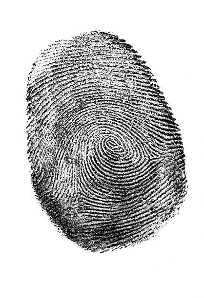 fingerprint in black and white. - fingerprint stock photos and pictures