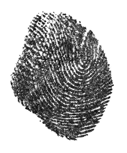 fingerprint pattern isolated on a white background. real fingerprint. black fingerprint on white paper. - deductive stock pictures, royalty-free photos & images