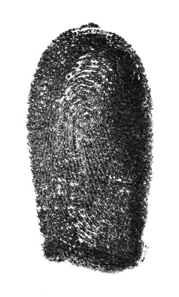 fingerprint pattern isolated on white background - deductive stock pictures, royalty-free photos & images