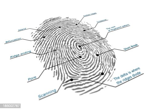 fingerprint. Isolated on white.