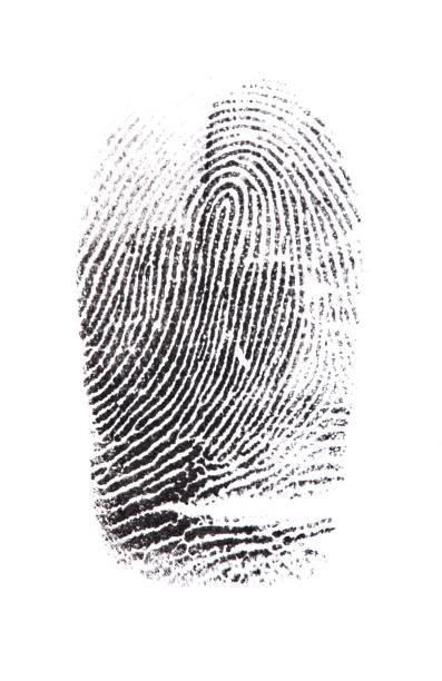 fingerprint. - deductive stock pictures, royalty-free photos & images