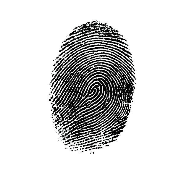 fingerprint-4 - fingerprint stock photos and pictures
