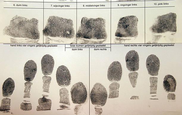 fingerprints - fingerprint stock photos and pictures