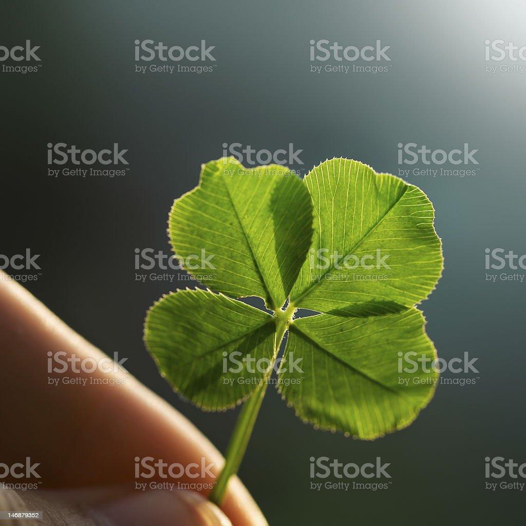 Fingers holding backlit four leaf clover stock photo