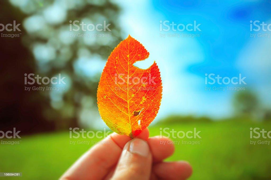 Fingers holding orange leaf royalty-free stock photo