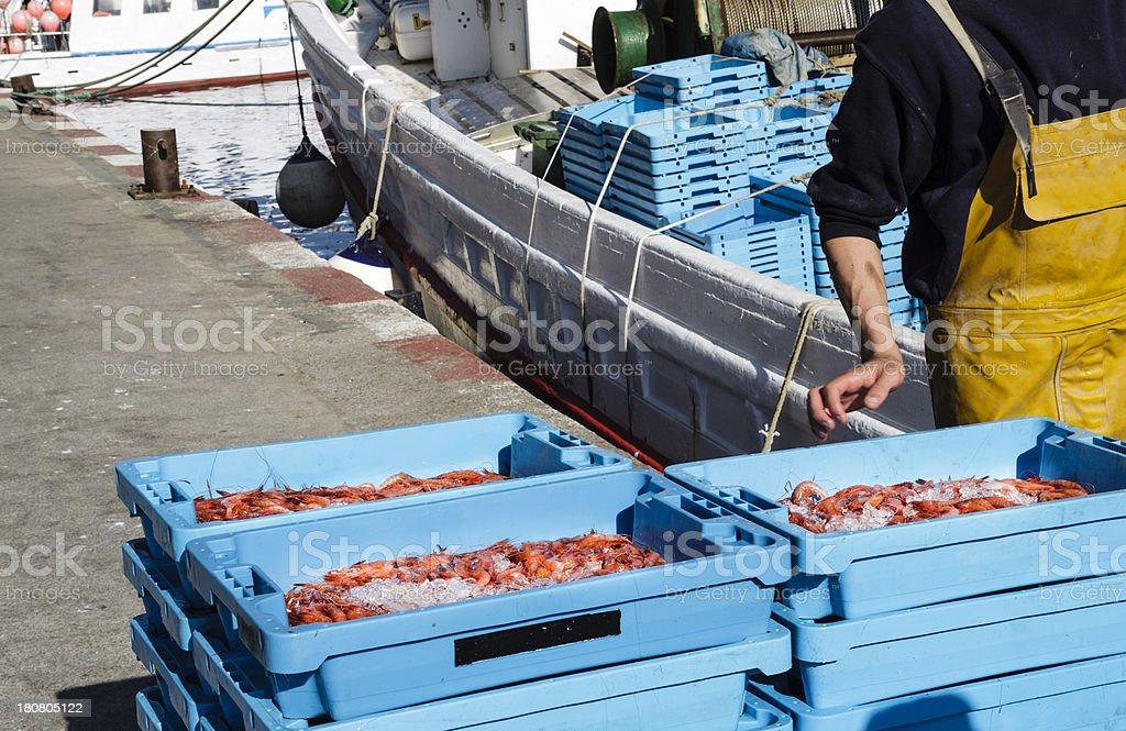 finished prawn fishing stock photo