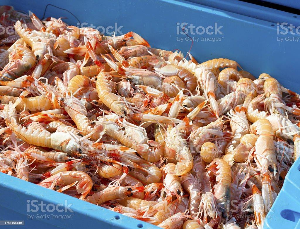 Terminado la pesca de camarón - foto de stock