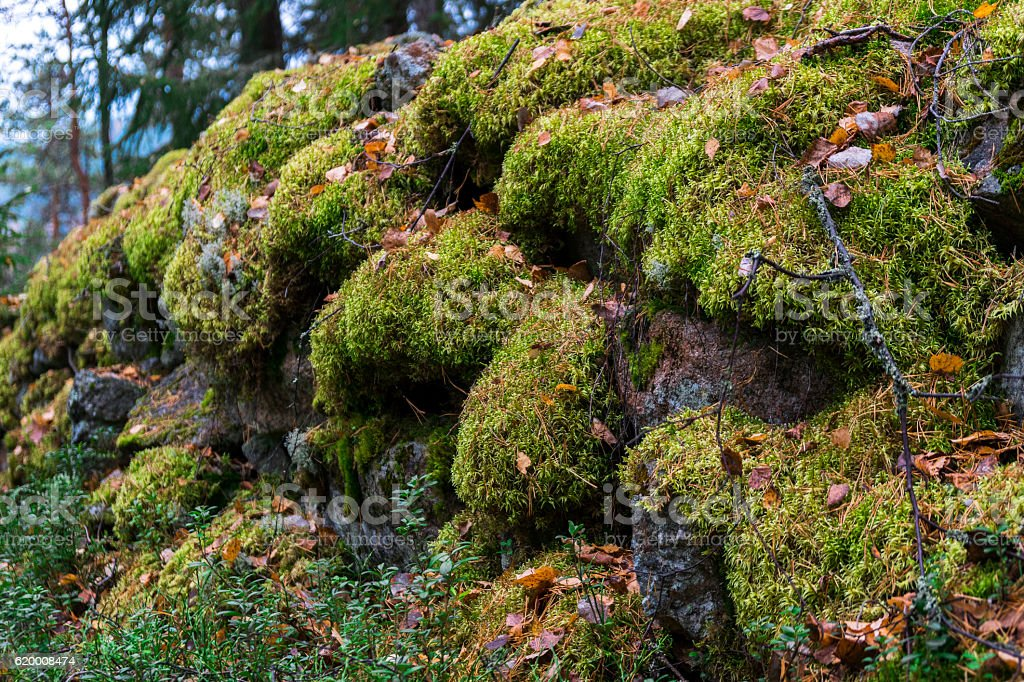 finland autumn green forest foto de stock royalty-free