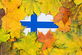 Finland flag buried in yellow maple leaves. Autumn texture.