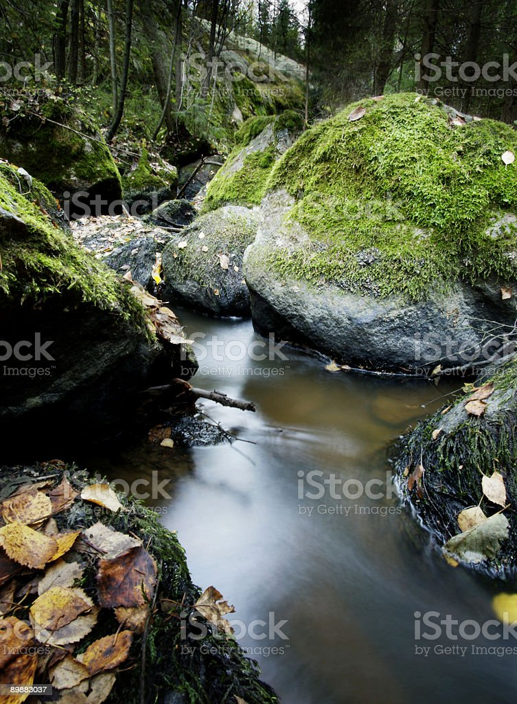 Finland forest stream royalty-free stock photo