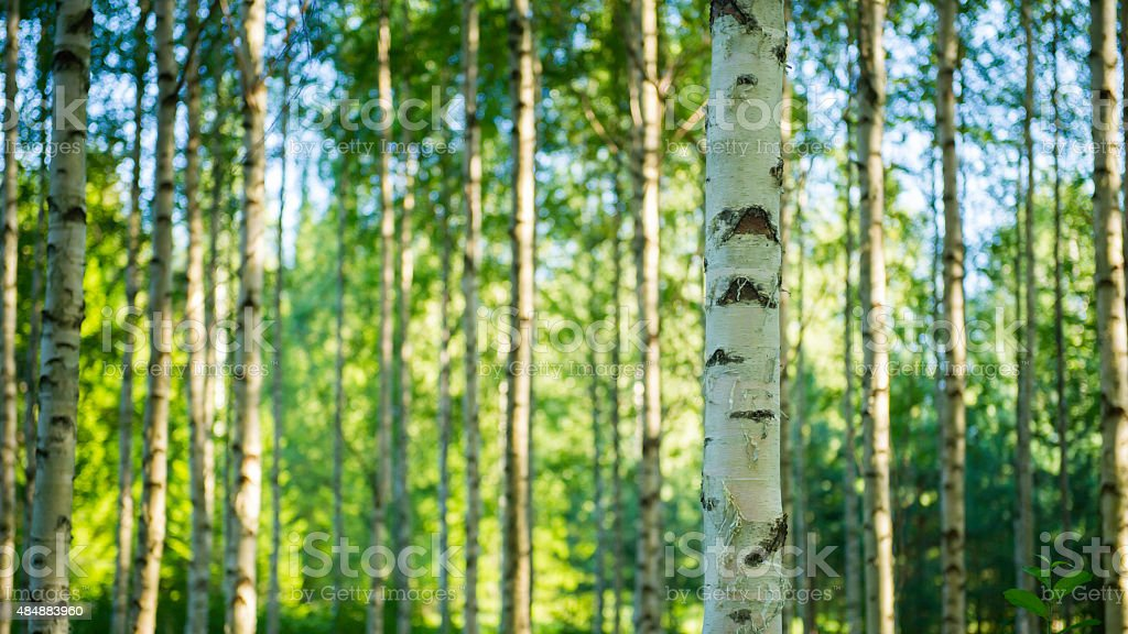 Finnish forest stock photo