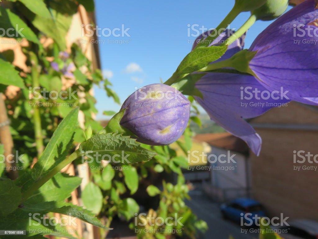 Fiore 98.Fiore Stock Photo Download Image Now Istock