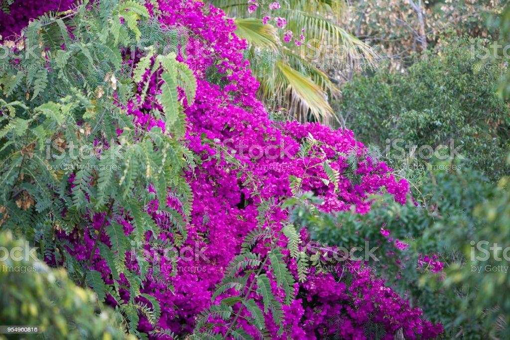 Fiore - foto stock