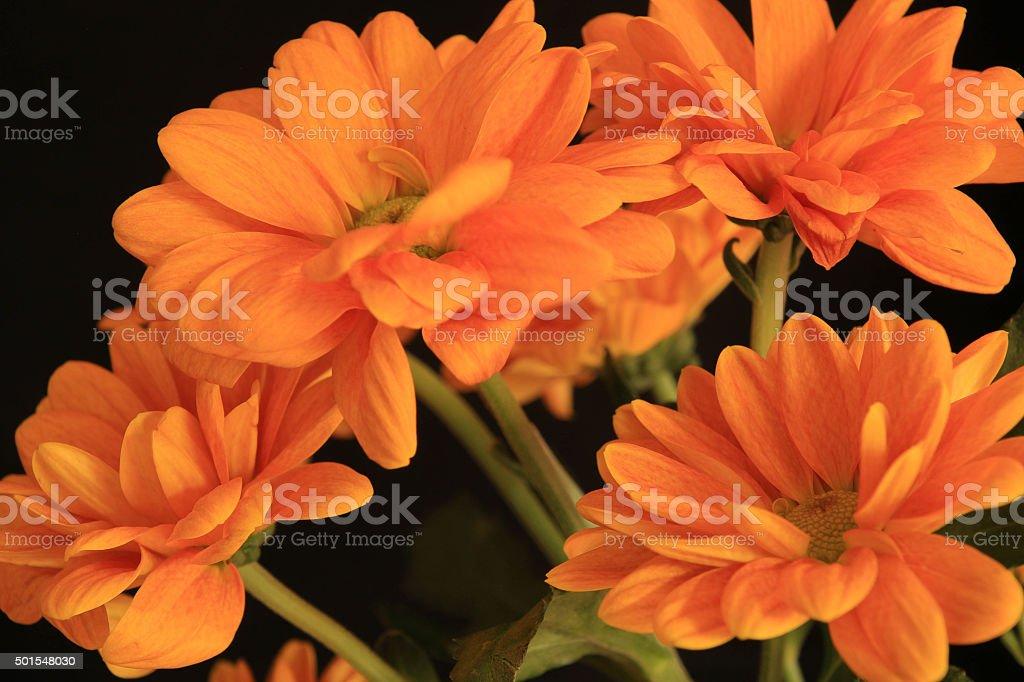 Fiori Arancioni.Fiori Arancioni Di Campagna Stock Photo Download Image Now Istock