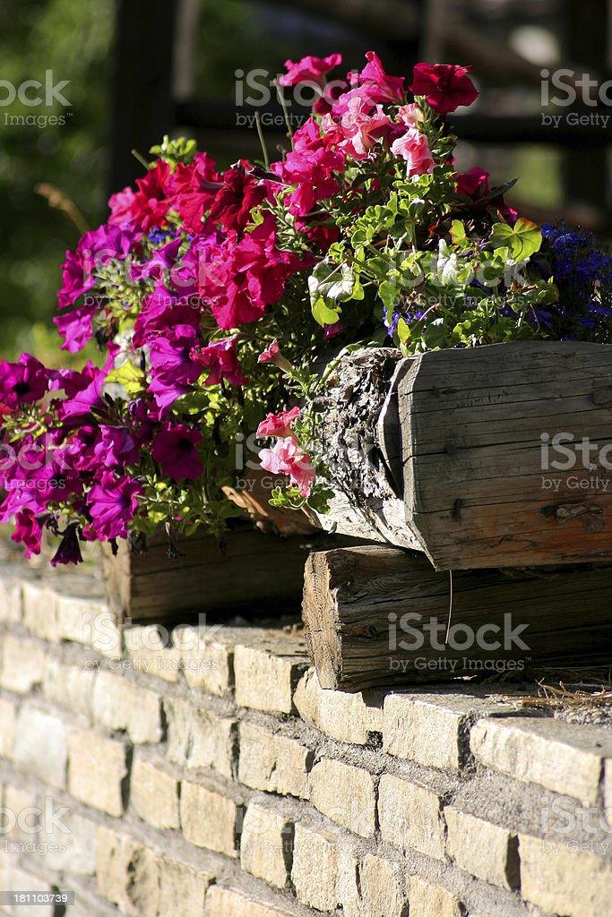 fiori e piante royalty-free stock photo