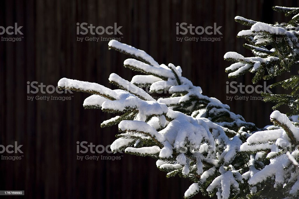 fir branch and snow royalty-free stock photo