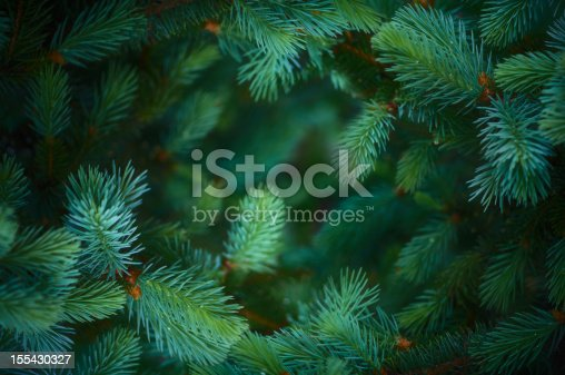 Fir branch background]