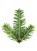 Fresh branch of a fir isolated on a white background.