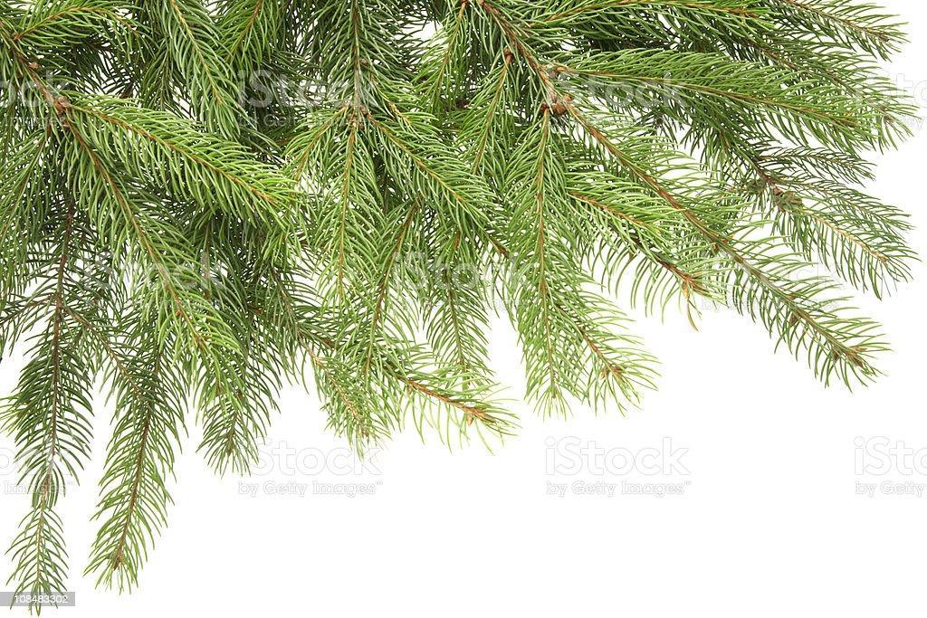 fir branch frame royalty-free stock photo