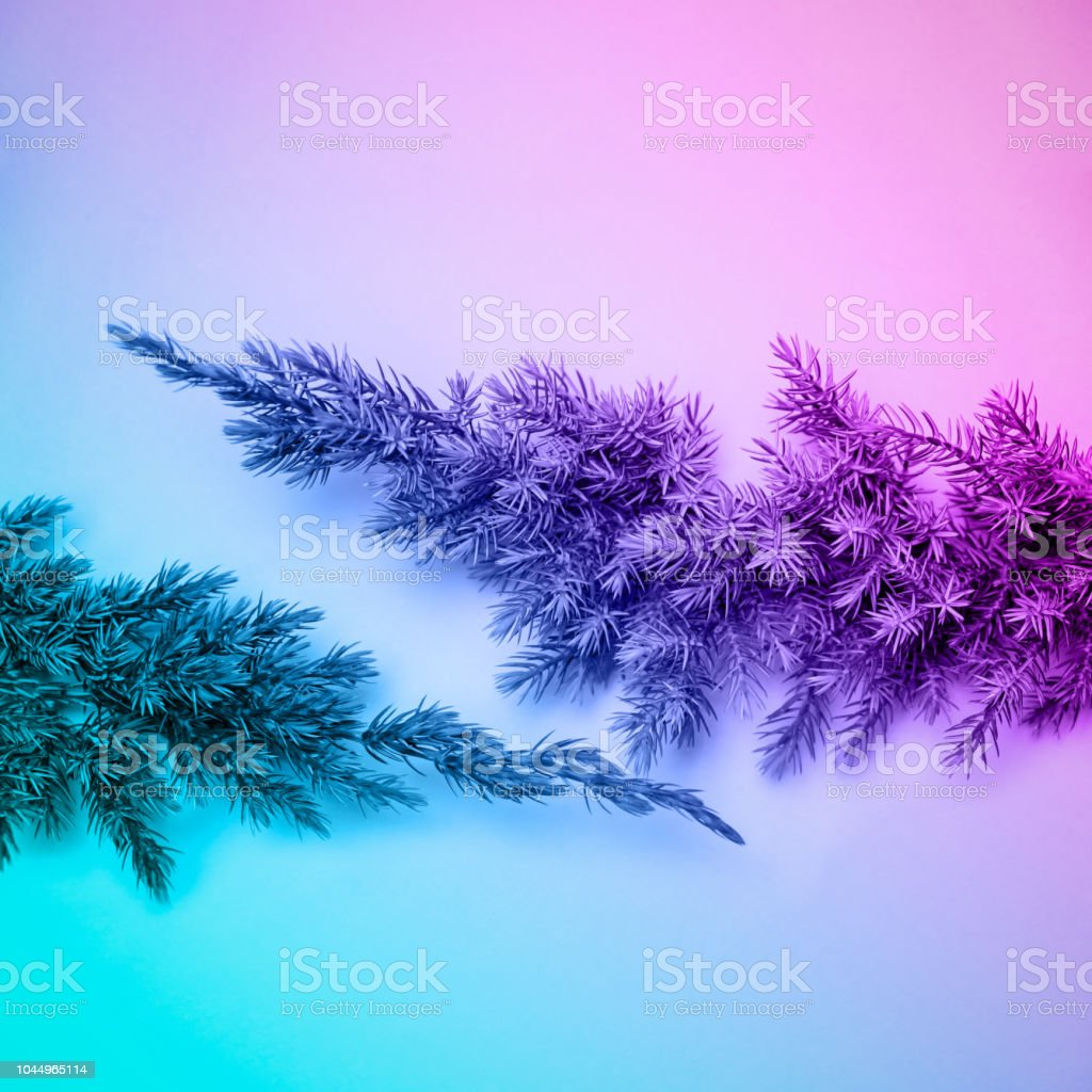 Fir Branch In Pastel Neon Colors Flat Lay Minimal Style Copy Space