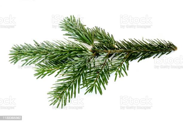Photo of Fir branch isolated on white background