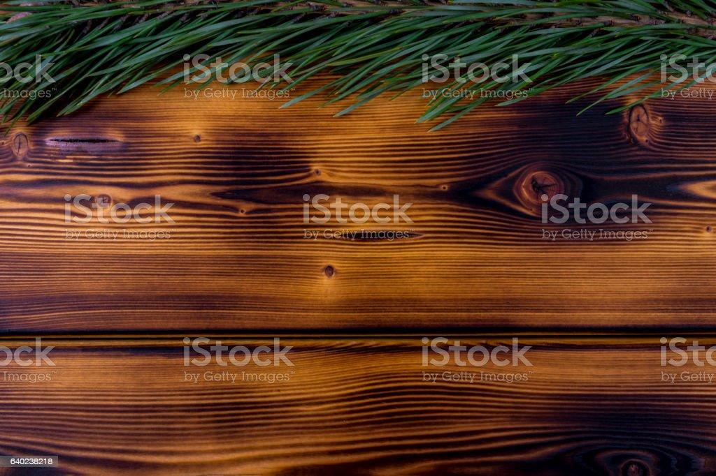 fir branch on a brunt wooden background texture stock photo