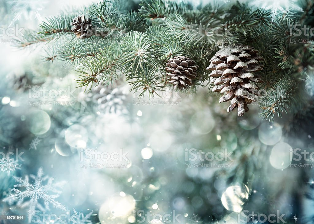 Fir Branch With Pine Cone And Snow Flakes bildbanksfoto