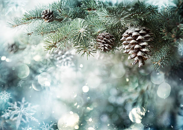 fir branch with pine cone and snow flakes - christmas green stock photos and pictures