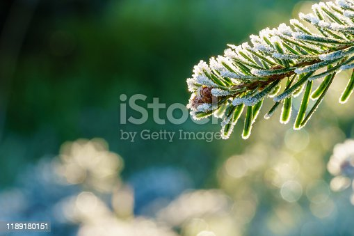 A fir branch with small fir cones covered with white ice crystals of hoar frost is back lit by the morning sun in winter. Closeup macro shot, eye level side view, background blur with copy space
