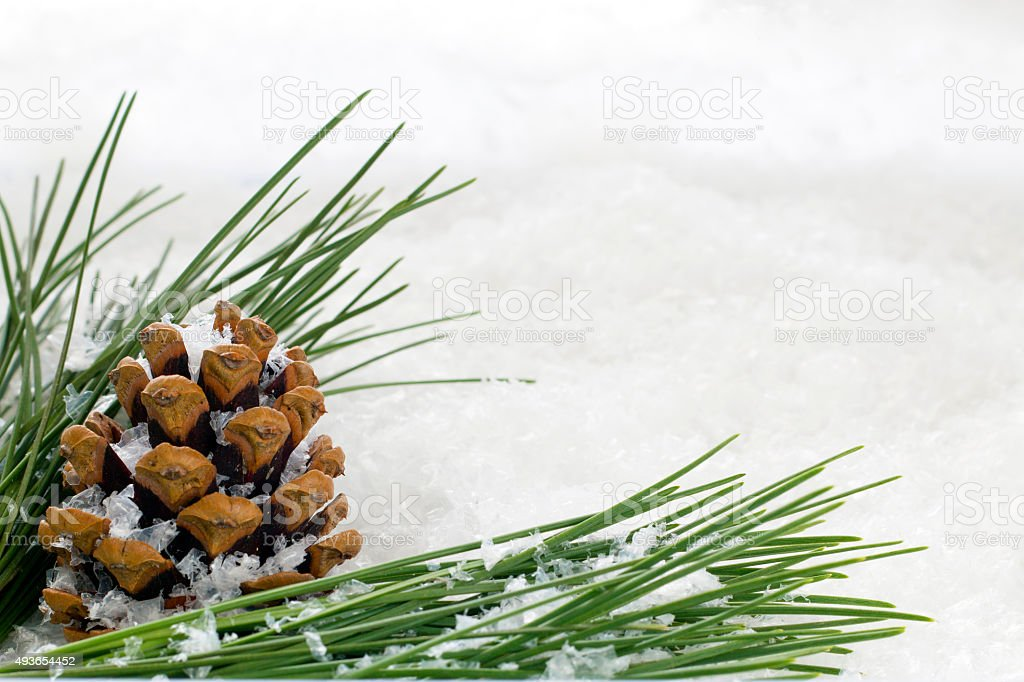 Fir Cone and Branch with Snow Flakes stock photo