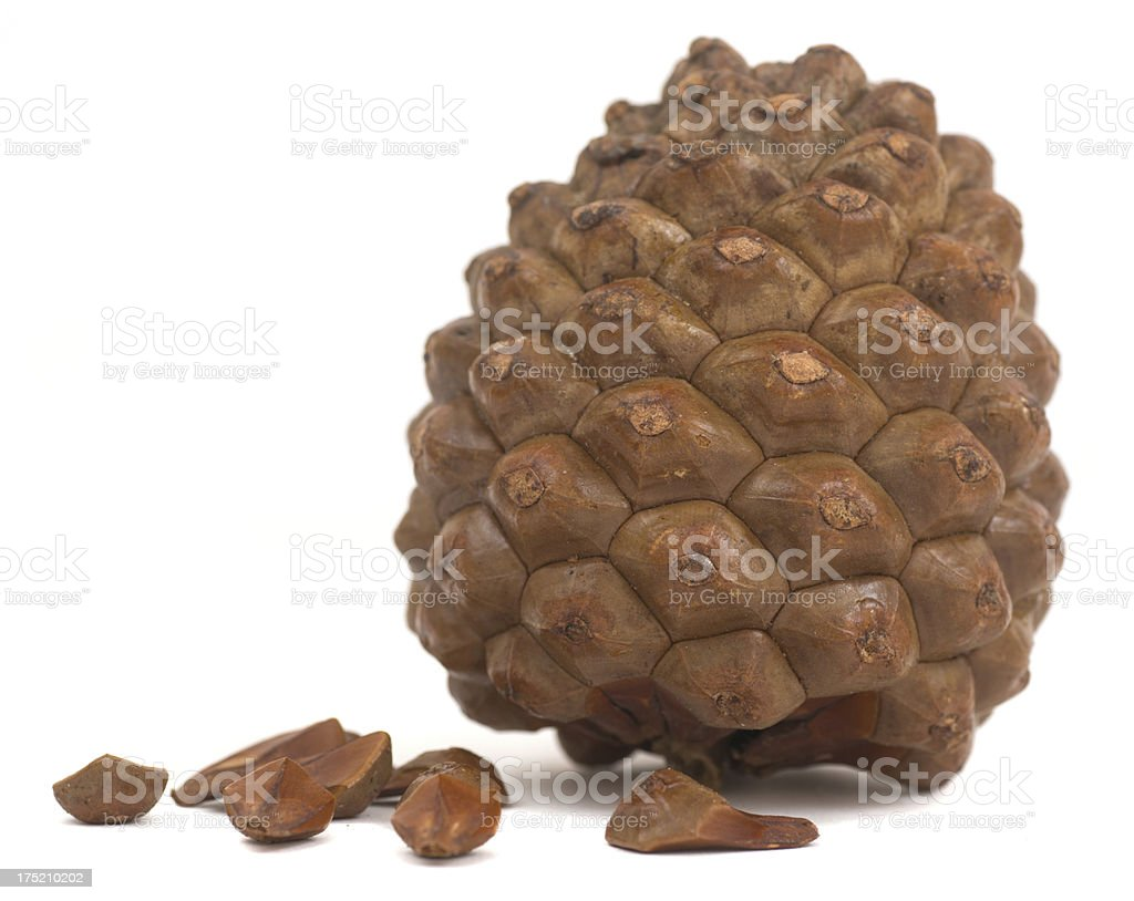 fir cone pine - Pinienzapfen royalty-free stock photo