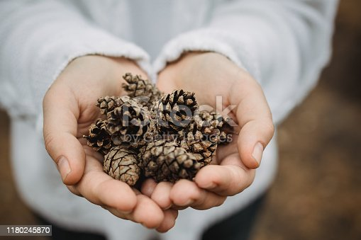 fir cones in female hands. Top view, close-up, blur. Against the background of autumn yellow foliage.