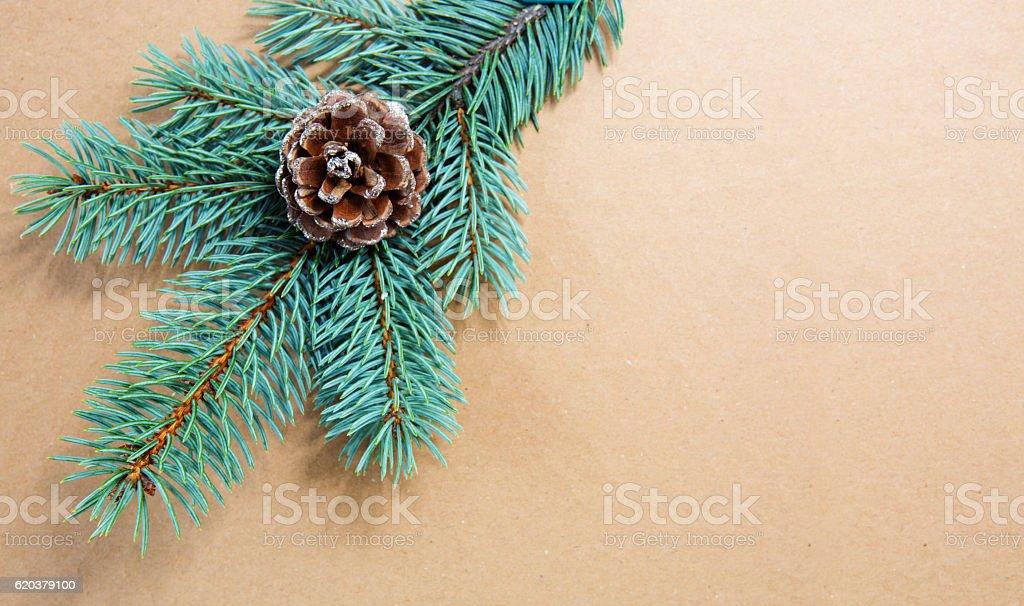 Fir cones on green spruce branch isolated . zbiór zdjęć royalty-free