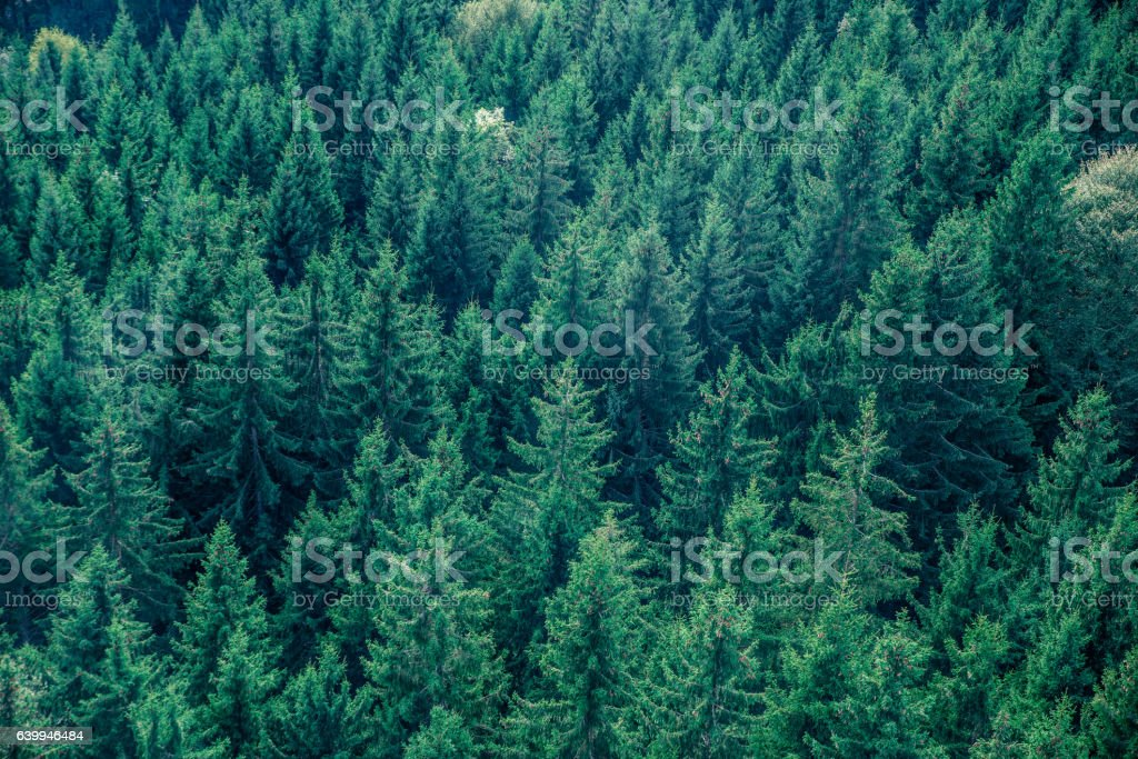 Fir forest view from above - beautiful nature of forest stock photo