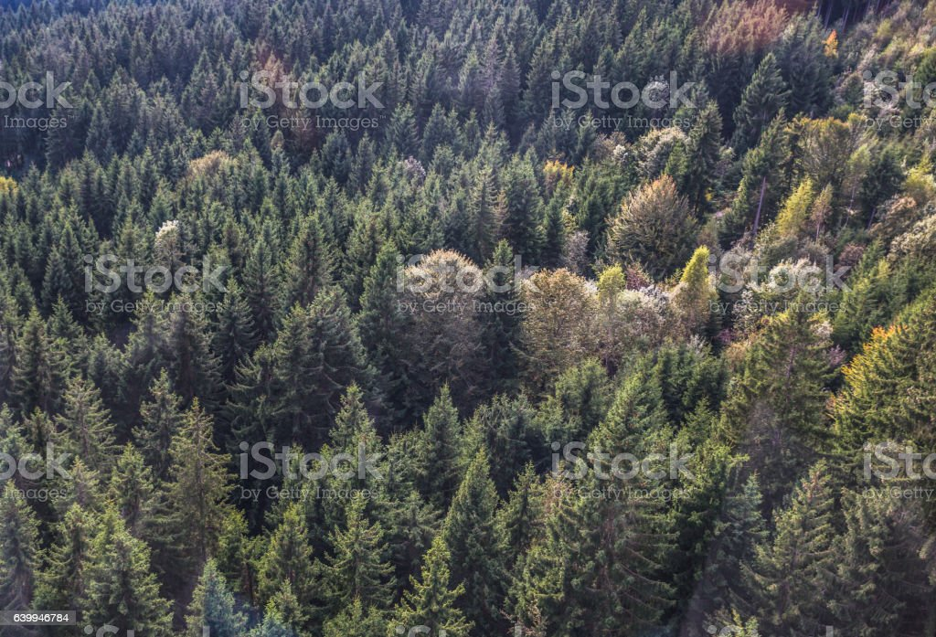 Fir Forest View From Above Beautiful Nature Of Forest Stockfoto Und