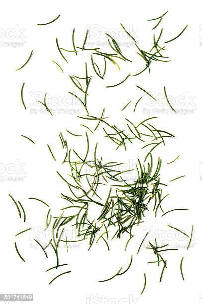 Photo of fir needles