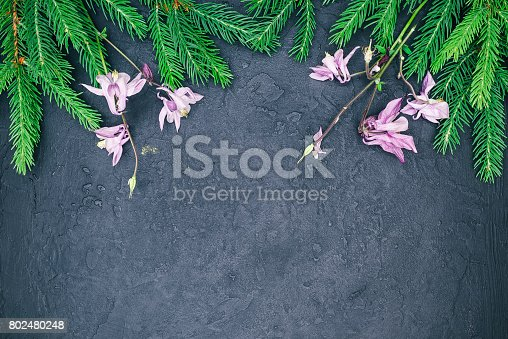 istock Fir tree and flowers border 802480248