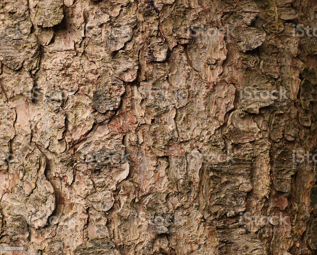 Fir Tree Bark wallpaper stock photo