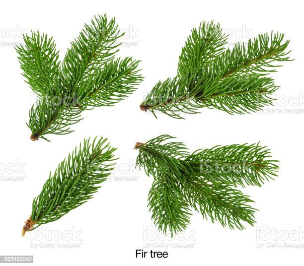 Photo of Fir tree branches isolated on white without shadow Set