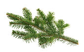 istock Fir tree isolated on white background 1200798308