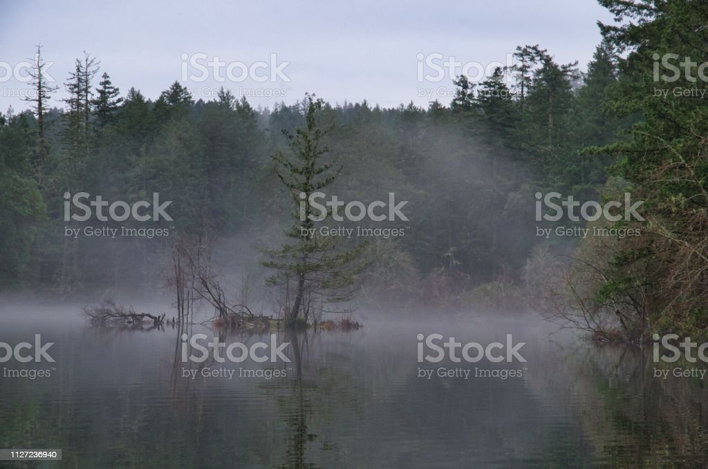 Fir Tree On Flooded Island Stands Out Against The Fog On