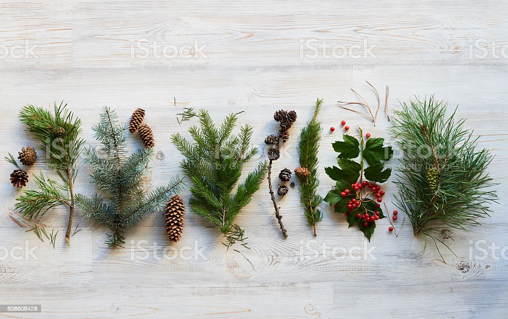 Fir tree plant stock photo