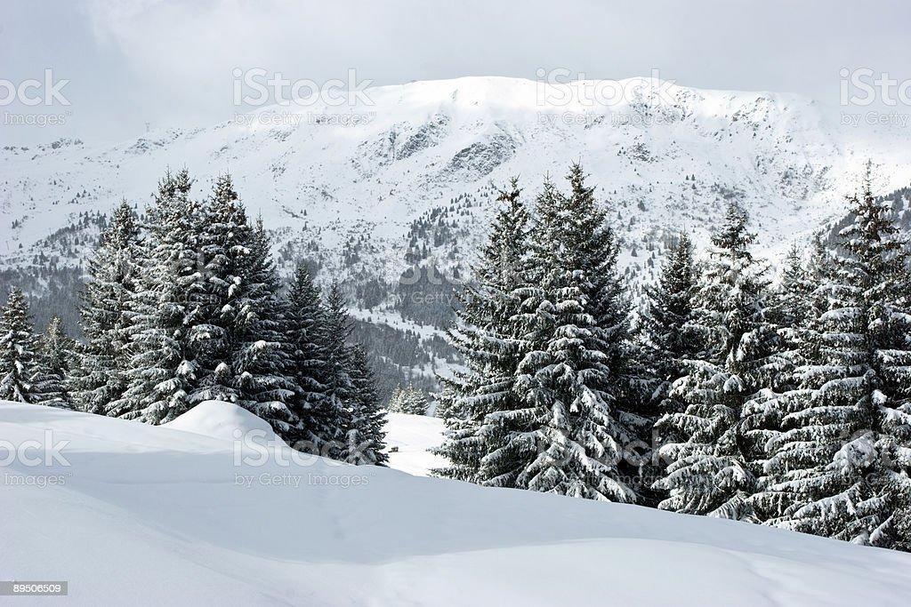 Fir trees on winter mountain royalty-free stock photo
