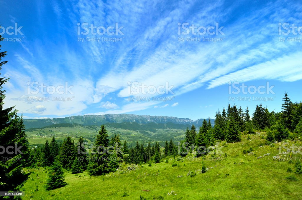Fir Trees Under Blue Sky in Mountain Valley royalty-free stock photo