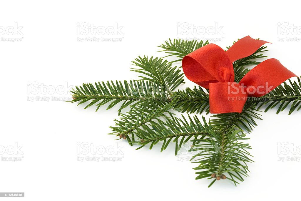fir with bow royalty-free stock photo
