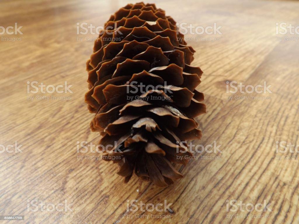 Fir-cone stock photo