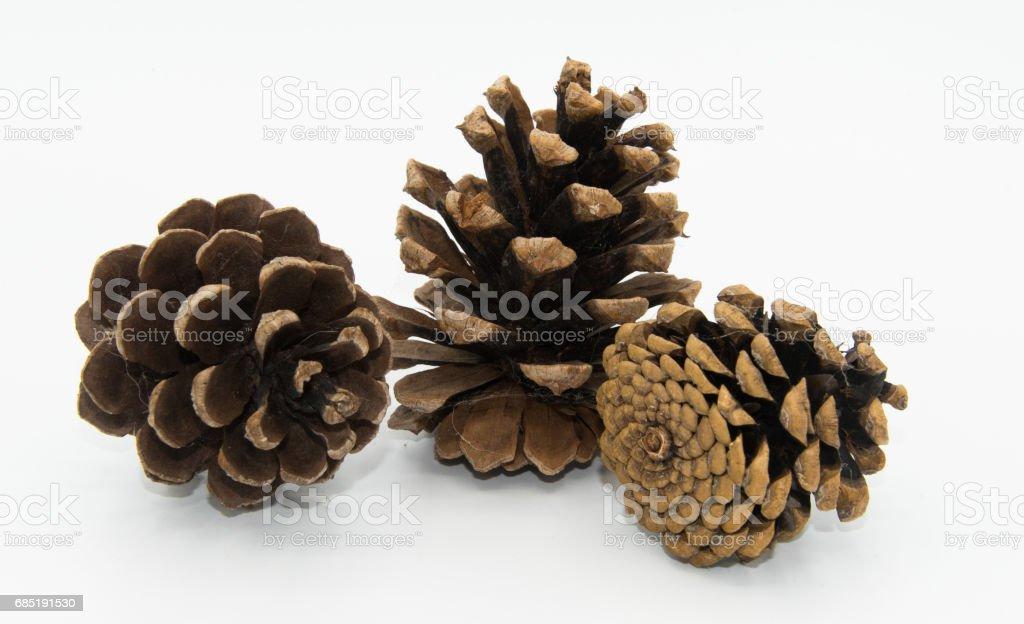 Fir-cones stock photo