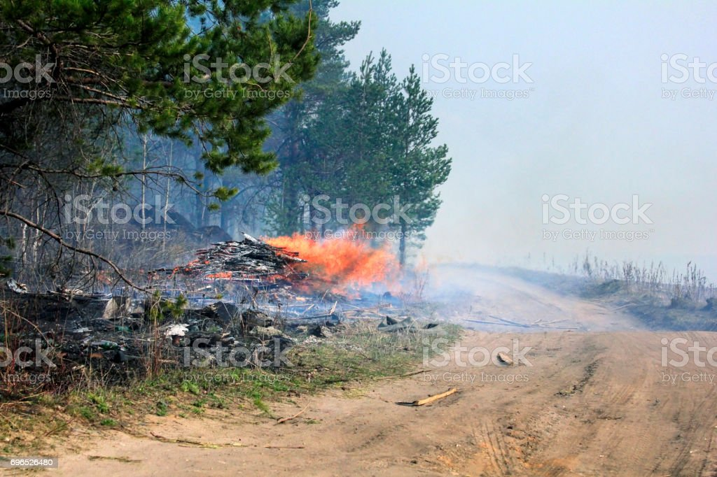 fire and smokie in forest stock photo