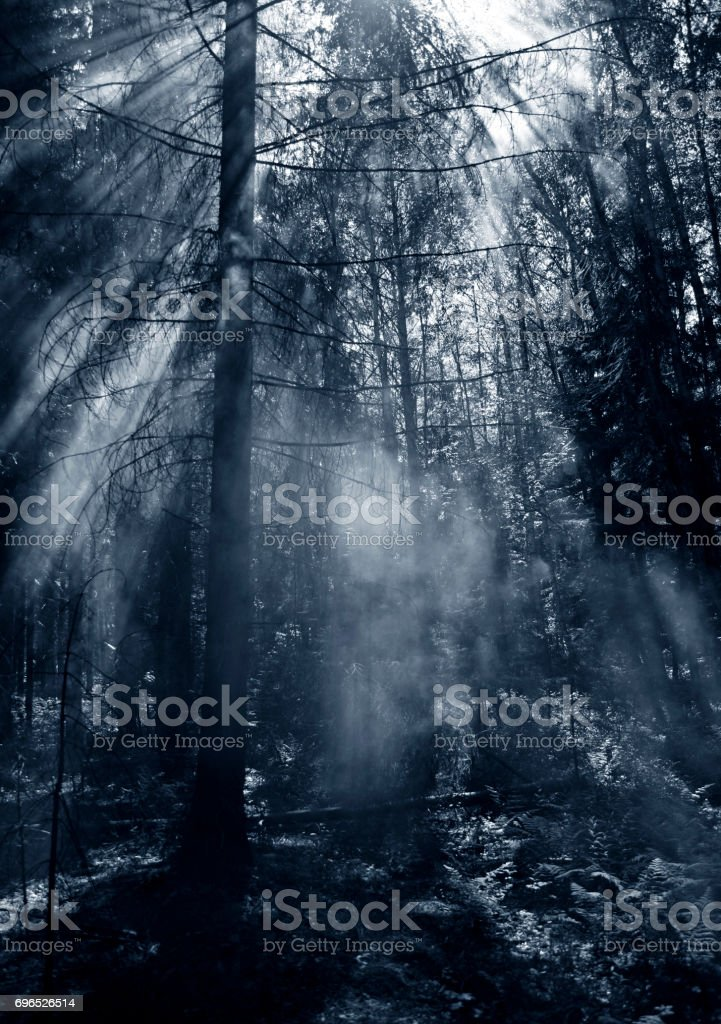 fire and smokie n forest stock photo