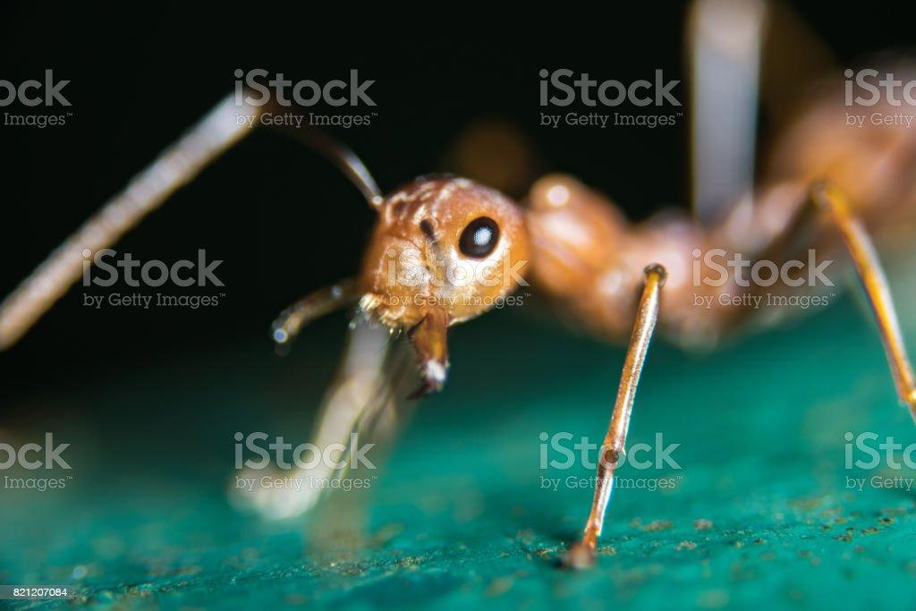 Fire Ants in Public Park stock photo